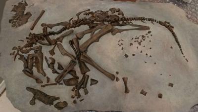 Детёныши динозавров не спешили вылупляться из яиц